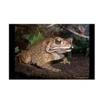 Toad Photography Print