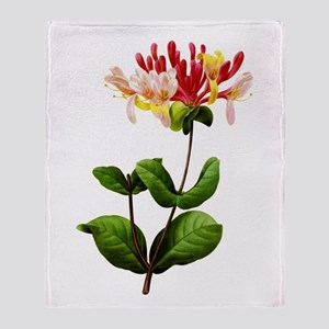 Chevrefeuille or Red Honeysuckle by Redoute Stadi