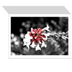 Flower Greeting Cards (Pk of 10)