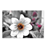 FLOWER Postcards (Package of 8)