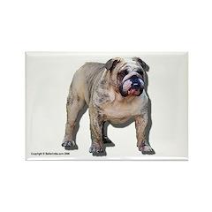 Bulldog Magnet Tyson (10 pack)