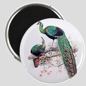 Peacocks Magnet