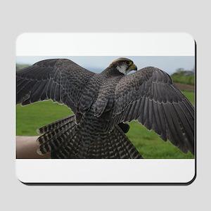 Peregrine Falcon Mousepad