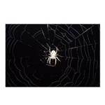 Spooky Spider Postcards (Package of 8)