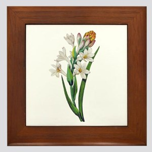 Tuberosa by Pierre Joseph Redoute Framed Tile