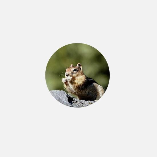 Squirrel on rock Mini Button