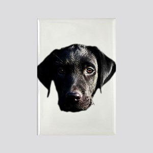 Black lab Rectangle Magnet