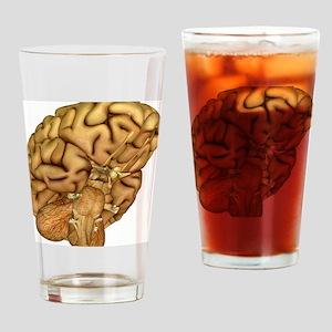 Brain anatomy - Drinking Glass