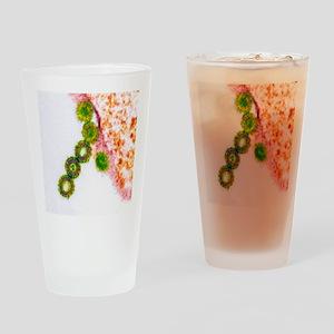 H1N1 swine flu virus, TEM - Drinking Glass