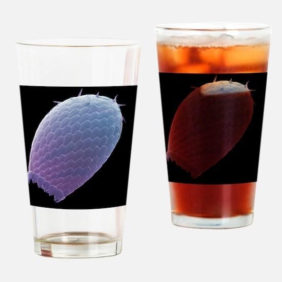 Euglypha amoeba shell, SEM - Drinking Glass