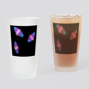 Dividing cells - Drinking Glass