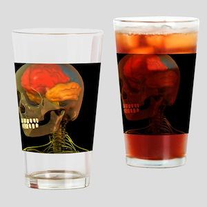 Skull and brain anatomy, artwork - Drinking Glass