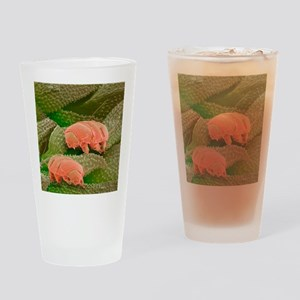 Water bears, SEM - Drinking Glass