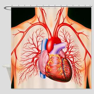 Human heart, artwork - Shower Curtain