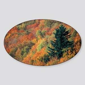 Autumnal colours - Sticker (Oval)