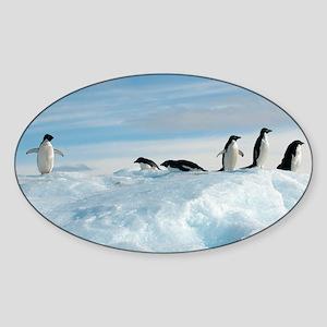 Adelie penguins - Sticker (Oval)