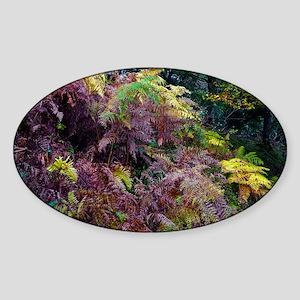 Bracken in Exmoor National Park - Sticker (Oval)