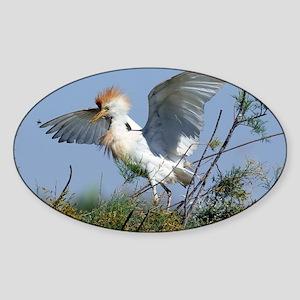 Cattle egret in breeding plumage - Sticker (Oval)