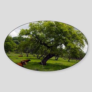Cattle under a holm oak tree - Sticker (Oval)