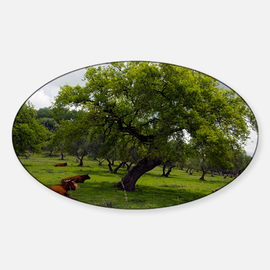 Cattle under a holm oak tree - Sticker (Oval)