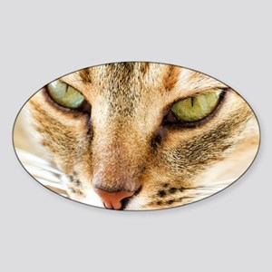 Domestic cat - Sticker (Oval)