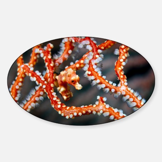 Denise's pygmy seahorse - Sticker (Oval)