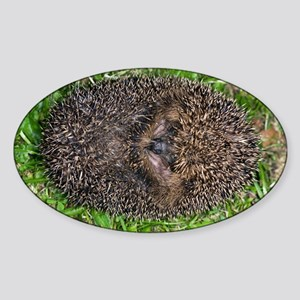 European hedgehog - Sticker (Oval)