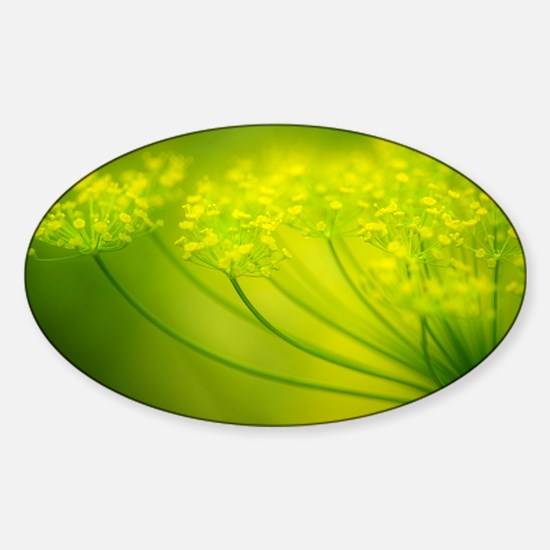 Dill (Anethum graveolens) - Sticker (Oval)