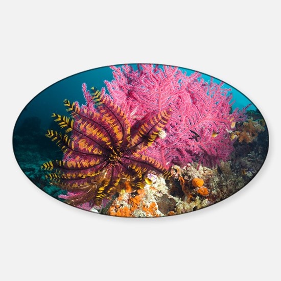 Featherstar on gorgonian coral - Sticker (Oval)