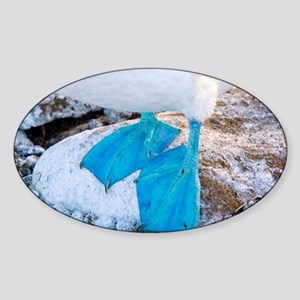 Feet of a blue-footed booby - Sticker (Oval)