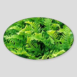 Fern leaves - Sticker (Oval)