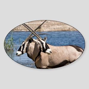 Gemsboks - Sticker (Oval)