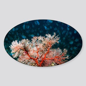 Gorgonian - Sticker (Oval)