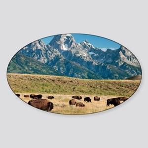Herd of American Bison - Sticker (Oval)