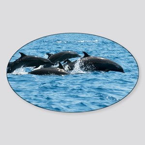 Indo pacific bottlenose dolphins - Sticker (Oval)