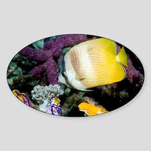 Klein's butterflyfish - Sticker (Oval)