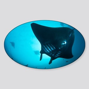 Manta rays - Sticker (Oval)