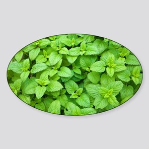 Mint (Mentha sp.) - Sticker (Oval)