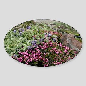 Mountain heathland - Sticker (Oval)