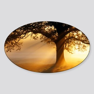 Oak tree at sunrise - Sticker (Oval)