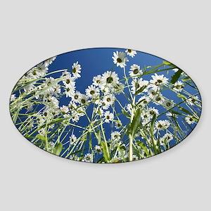 Ox-eye daisies - Sticker (Oval)