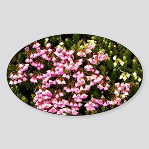 Red and white mountain heather - Sticker (Oval)