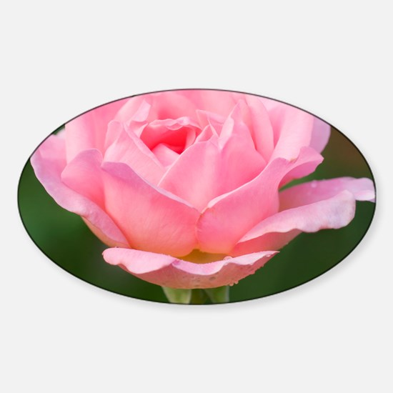Rose (Rosa sp.) - Sticker (Oval)
