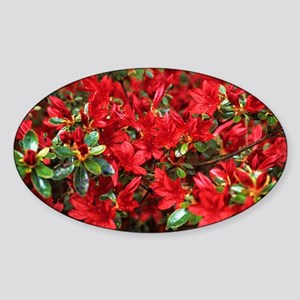 Rhododendron - Sticker (Oval)