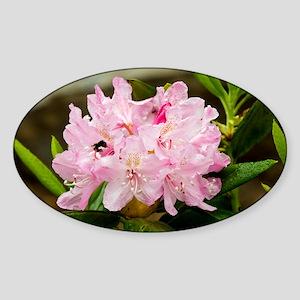Rhododendron macrophyllum - Sticker (Oval)