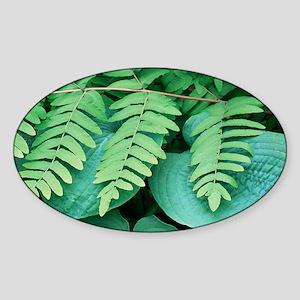 Royal fern (Osmunda regalis) - Sticker (Oval)