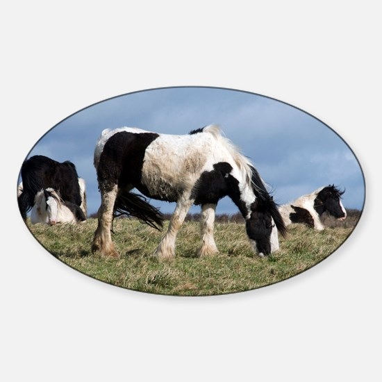 Shire horses - Sticker (Oval)