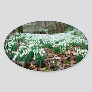 Snowdrops (Galanthus nivalis) - Sticker (Oval)