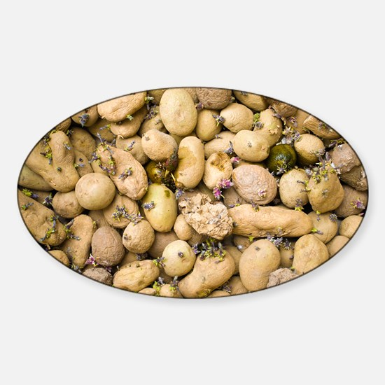 Sprouting potatoes - Sticker (Oval)