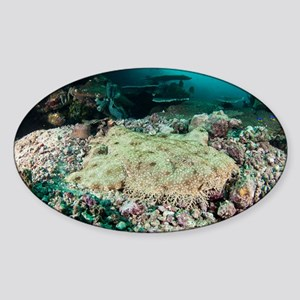Tassled wobbegong - Sticker (Oval)